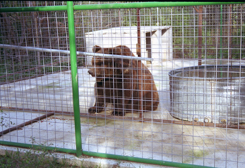 San Antonio Animal Santuary