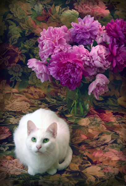 Nellie with Peonies
