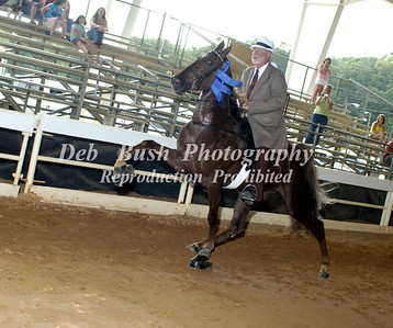 CLASS 6  THREE YEAR OLD MARES AND GELDINGS AMATEUR