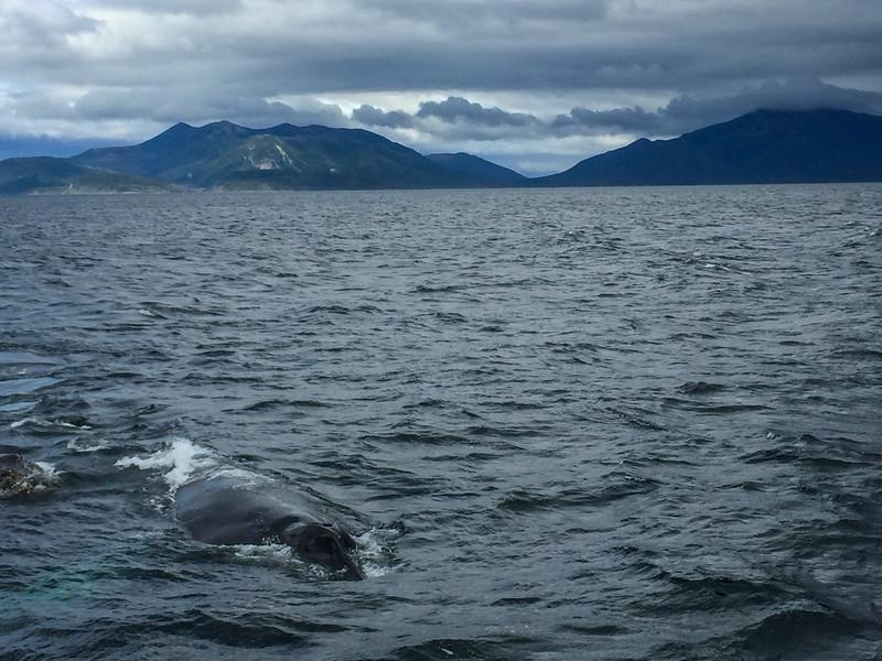 Patagonia18iphone-4315.jpg
