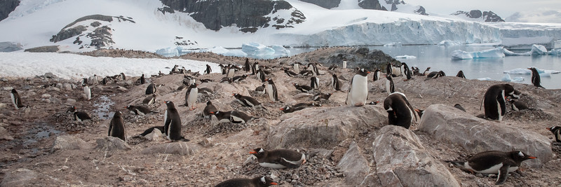 2019_01_Antarktis_03276.jpg