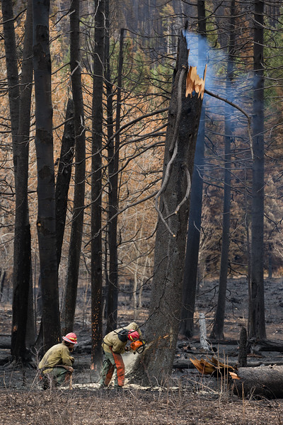 Roosevelt Fire Upper Hoback River-3.jpg