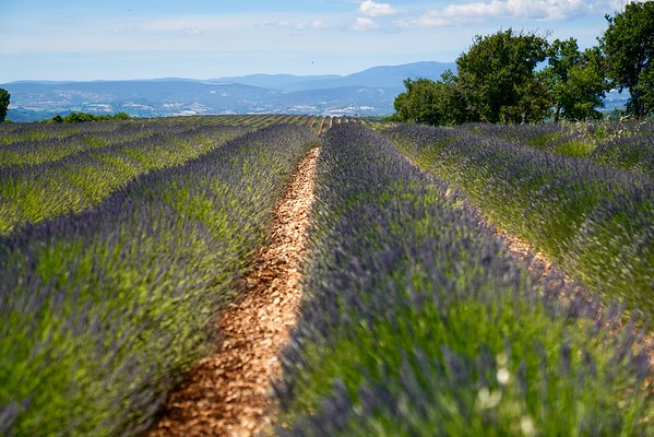 Provence 2019