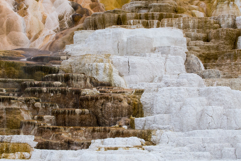 Mammoth Hot Springs-7463.jpg