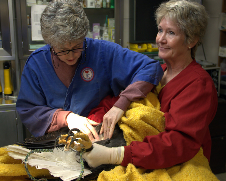 Dr Karen prepares to take a blood sample while Terri restrains Petra.
