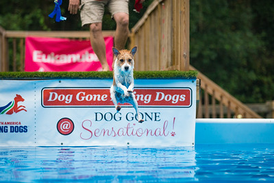 Diving Into Fall at Dog Gone Diving Dogs