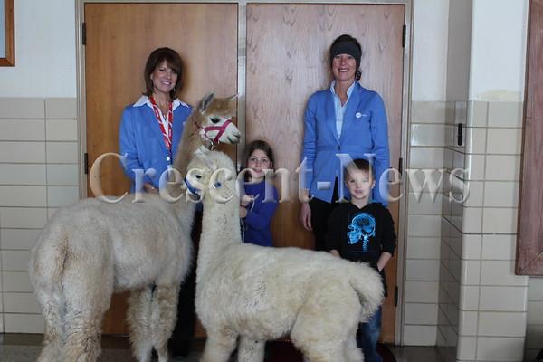 01-09-15 NEWS llamas at ayersville