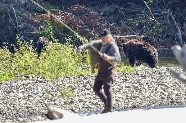 9-15-15 Bella Coola FP  Grizzly & Stupid Fisherman