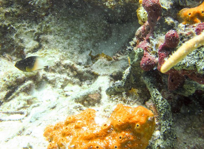 islamorada-diving-72.jpg