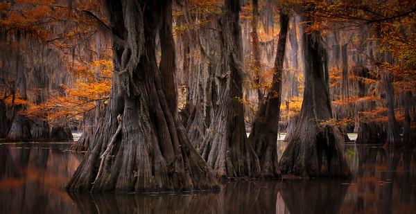 Autumn In the Bayou