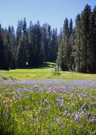 Yosemite National Park 2010