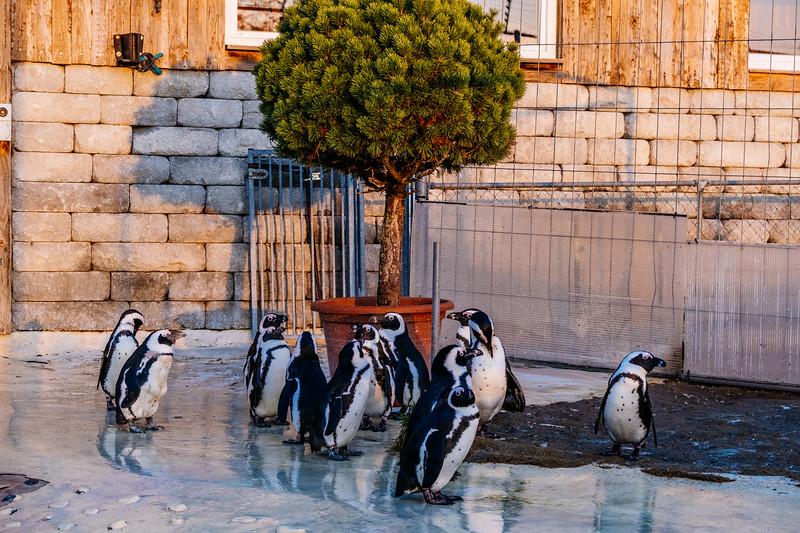 Tonis Zoo-0497.jpg