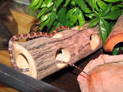 2005_12_27 Snake