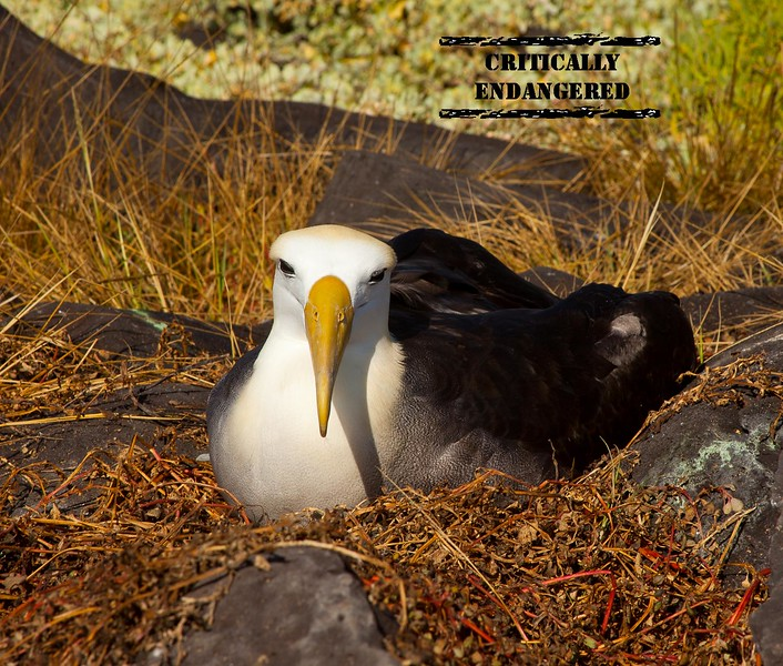 ENDANGERED PAGE WITH STAMP - ALBATROSS.jpg