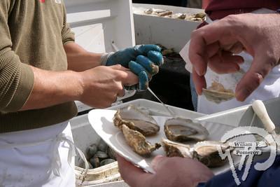 oysterFest — Wellfleet, MA ● 10 . 18 - 2008