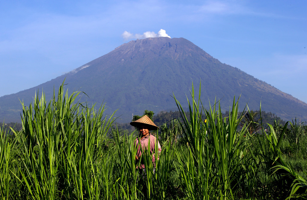 . A farmer works on a filed with Mount Agung volcano in the background in Karangasem, Bali island, Indonesia, Wednesday, Oct. 25, 2017. It has been a month since authorities raised the volcano\'s alert status to the highest level after a sudden increase in tremors. It last erupted in 1963, killing more than 1,000 people. (AP Photo/Firdia Lisnawati)