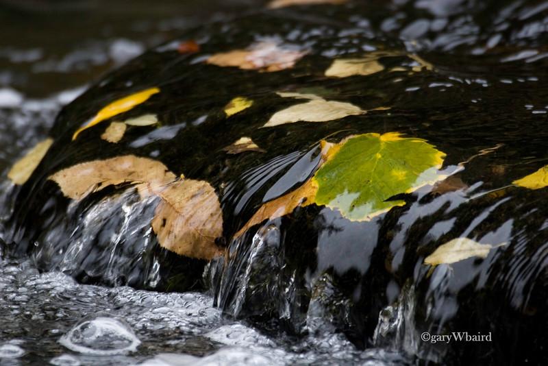 Fall Falls