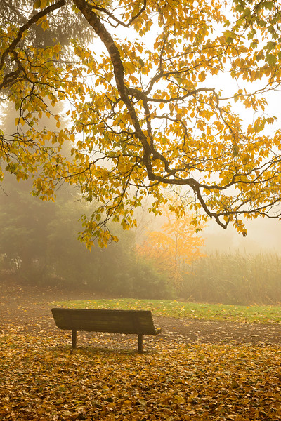 bench in fog 2.jpg