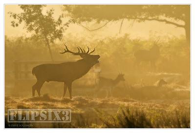 The Deer of Bradgate Park