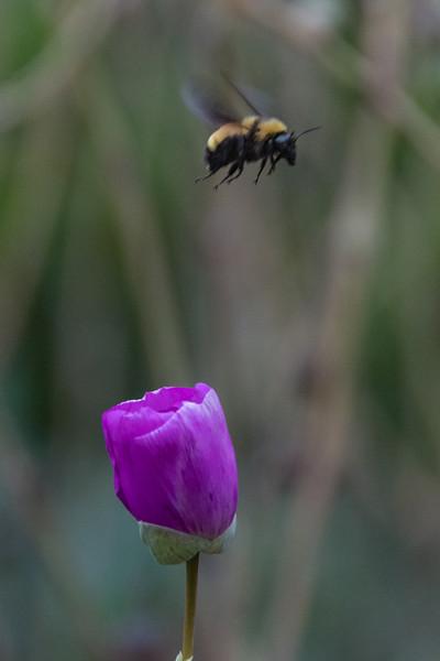Balboa Park Flowers-1016.jpg