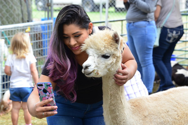 LF2017 FFL - Petting Zoo