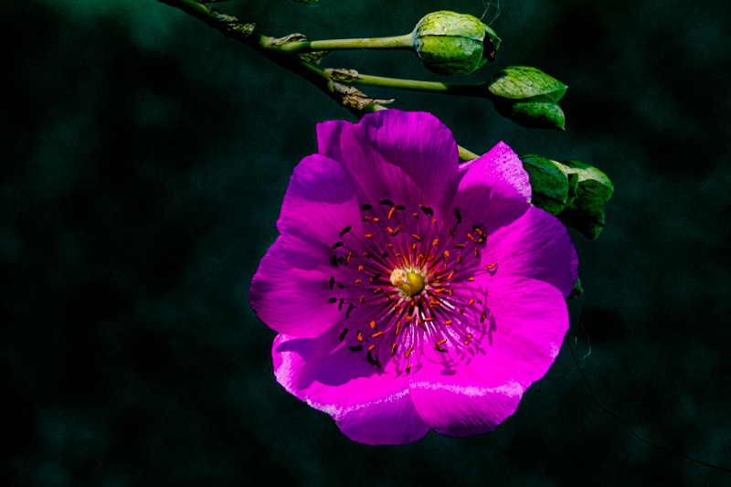 July 16 - Leaves and a flower on a sunny afternoon.jpg