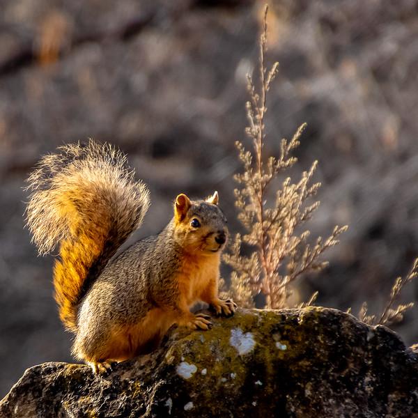 122.Dale Toweill.2.Squirrel.jpg