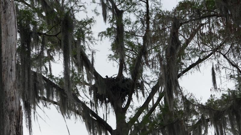 ManchacSwamp-6940.jpg