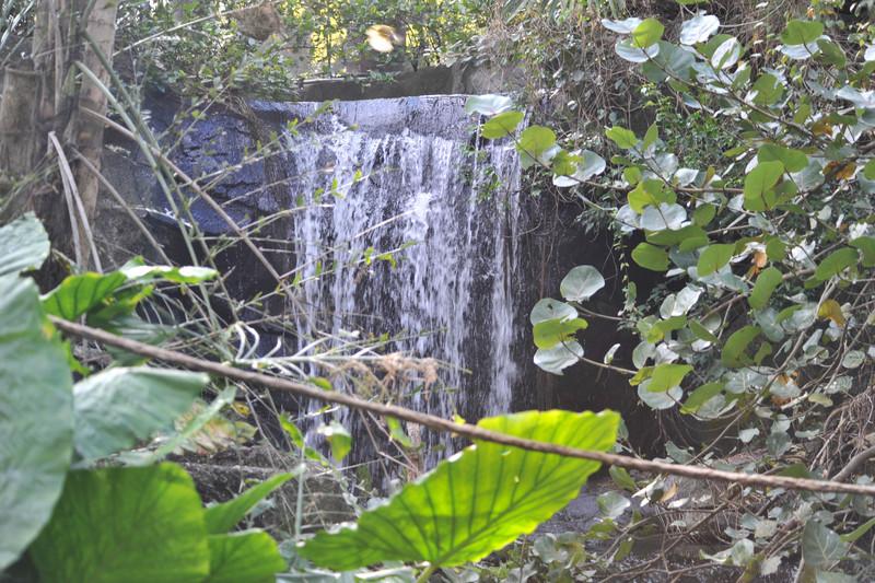 Pangani Forest Exploration Trail