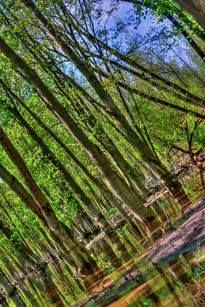 Minesing_Swamp_May2013 (259 of 263)_HDR