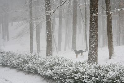 Snow January 20 2009