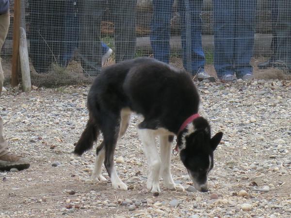 Alaska dogs trining base, Alaska - May, 2014
