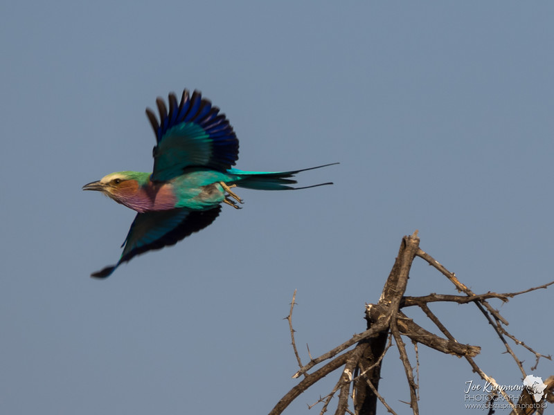 Colours in Flight 2