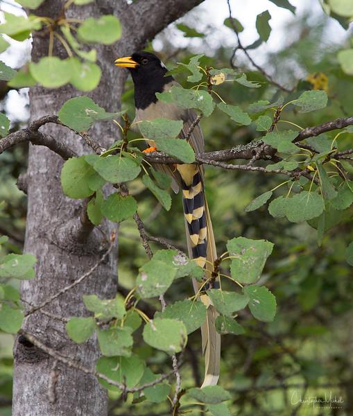 Paro Taktsang-tigers-nest_20120921_3004.jpg