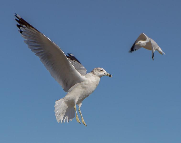 bird 2034-.jpg