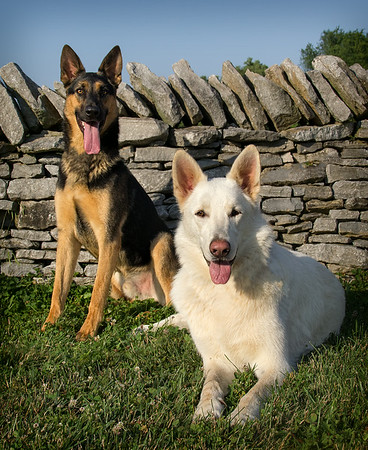 Loki, Tyr & Skadi