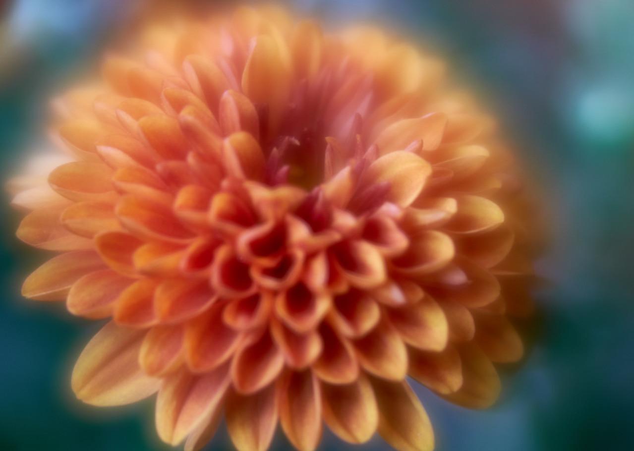 IMAGE: https://photos.smugmug.com/photos/i-x4DwLPk/0/a6692c6e/X2/i-x4DwLPk-X2.jpg