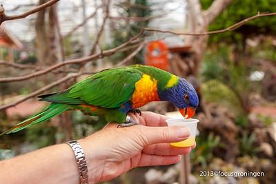 Vogels Papegaaien