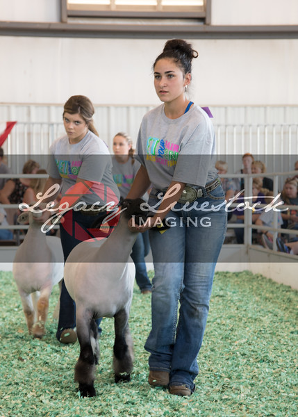 Jr Sheep