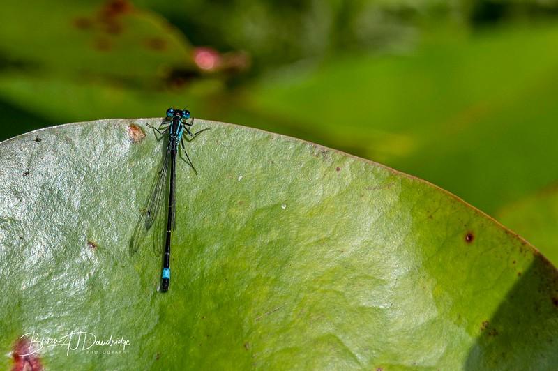 Garden_insectlife-0652.jpg