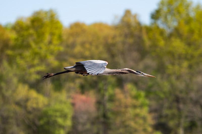 20210418 Birding at Huntley Meadows-13.jpg