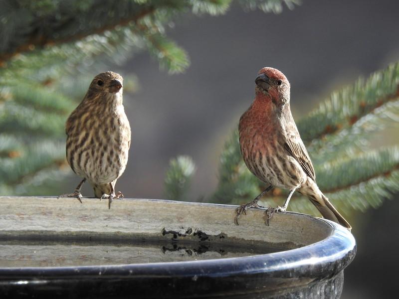 birds (111).JPG