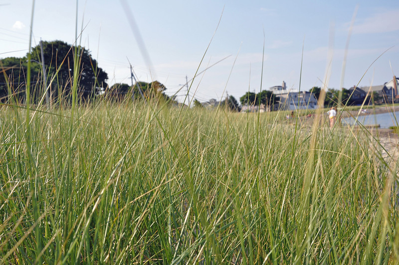 Scituate Beach - grass.jpg