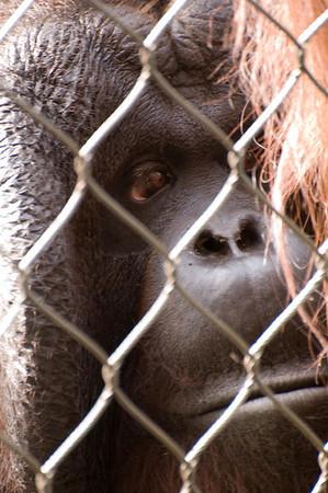 Los Angeles Zoo: Primates