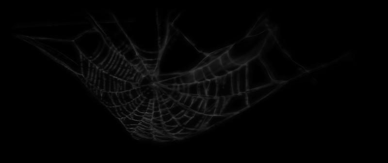 Spider Web 4.jpg