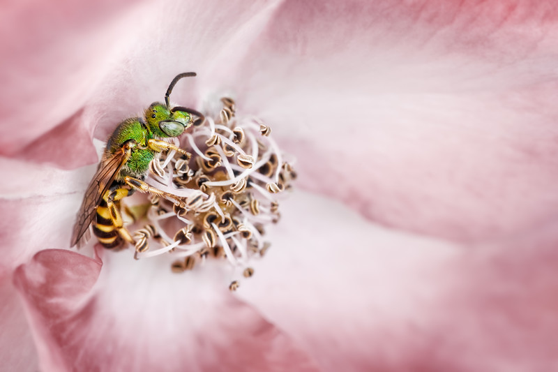 Wrestling With Stamens