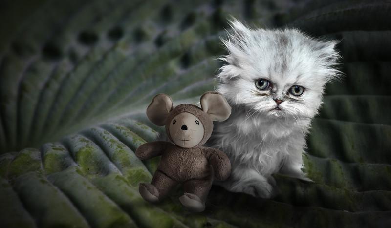 cat-mouse-lrz.jpg