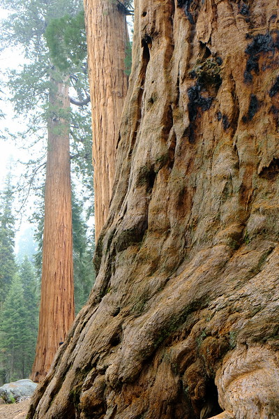 California Day 6 Sequoia 05-30-2017 91.JPG