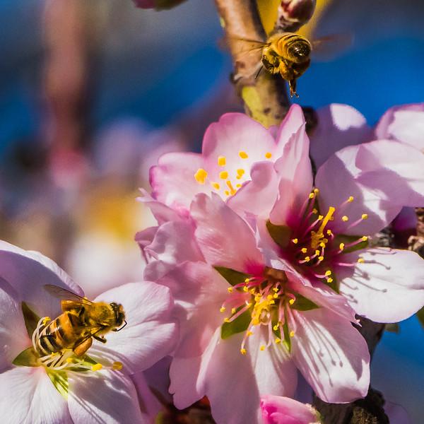 Spring Blossoms-2301.jpg
