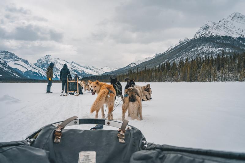 Dog Sledding Spray Lakes April 2021